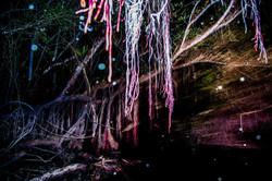 (5)Bosque anfibio