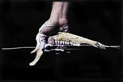 (4)Pistola