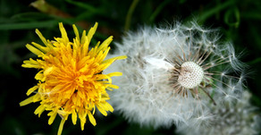 Confinement et méditation pleine conscience, un processus de transformation