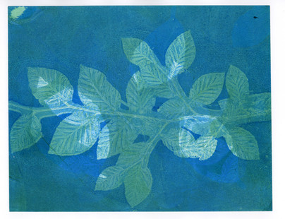 Blue Beech Branch Print