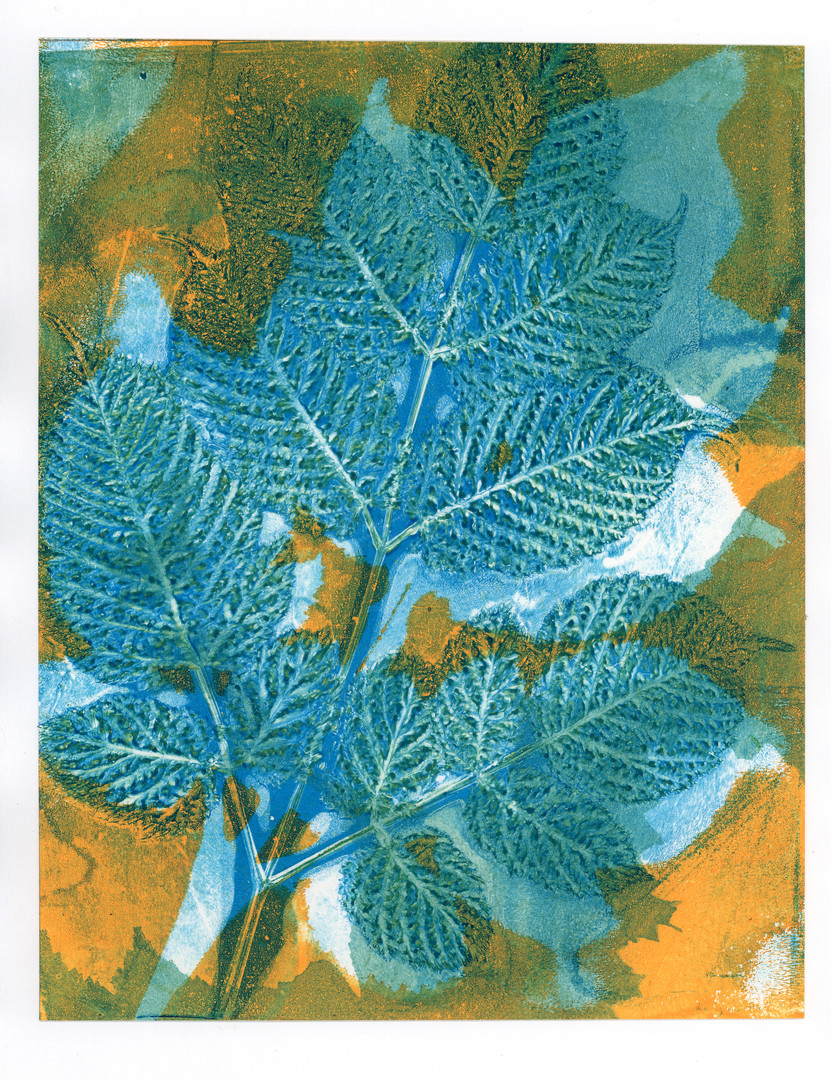 Abstract Beech branch print