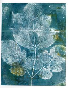 Blue beech branch, gold square