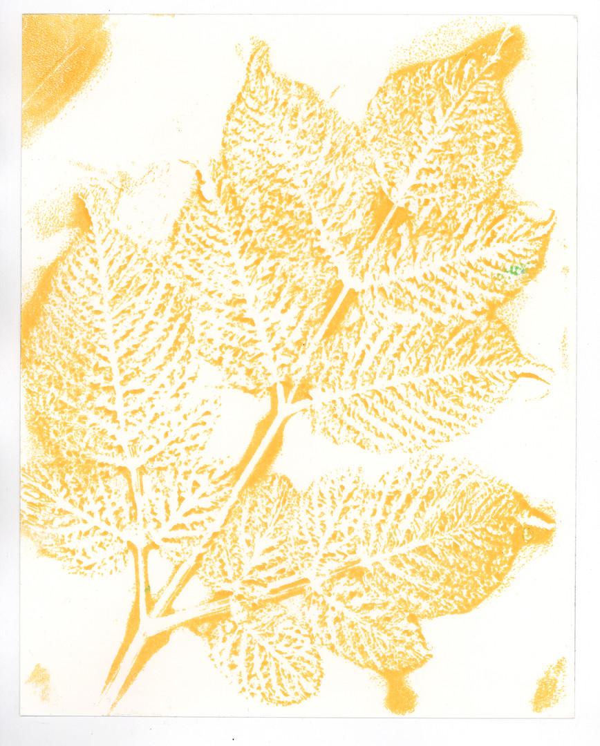 Yellow Beech Branch Print