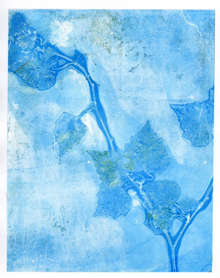 Pale Blue Birch Branch