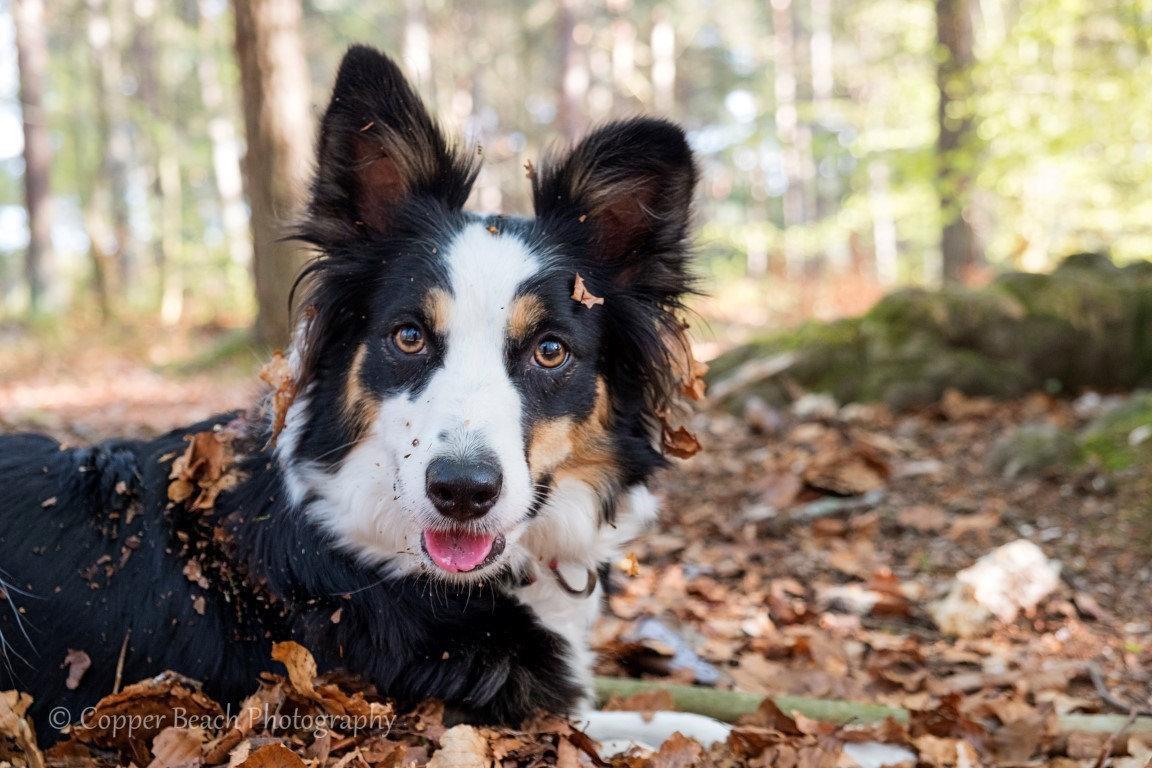 Portrait shoot - Pet!