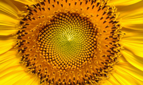 Fibonacci, and Lucas numbers, Patterns