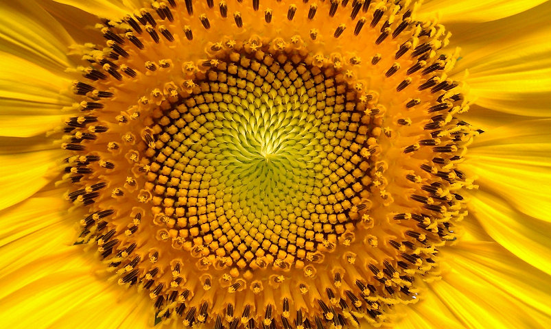 sunflower-94187_1920.jpg