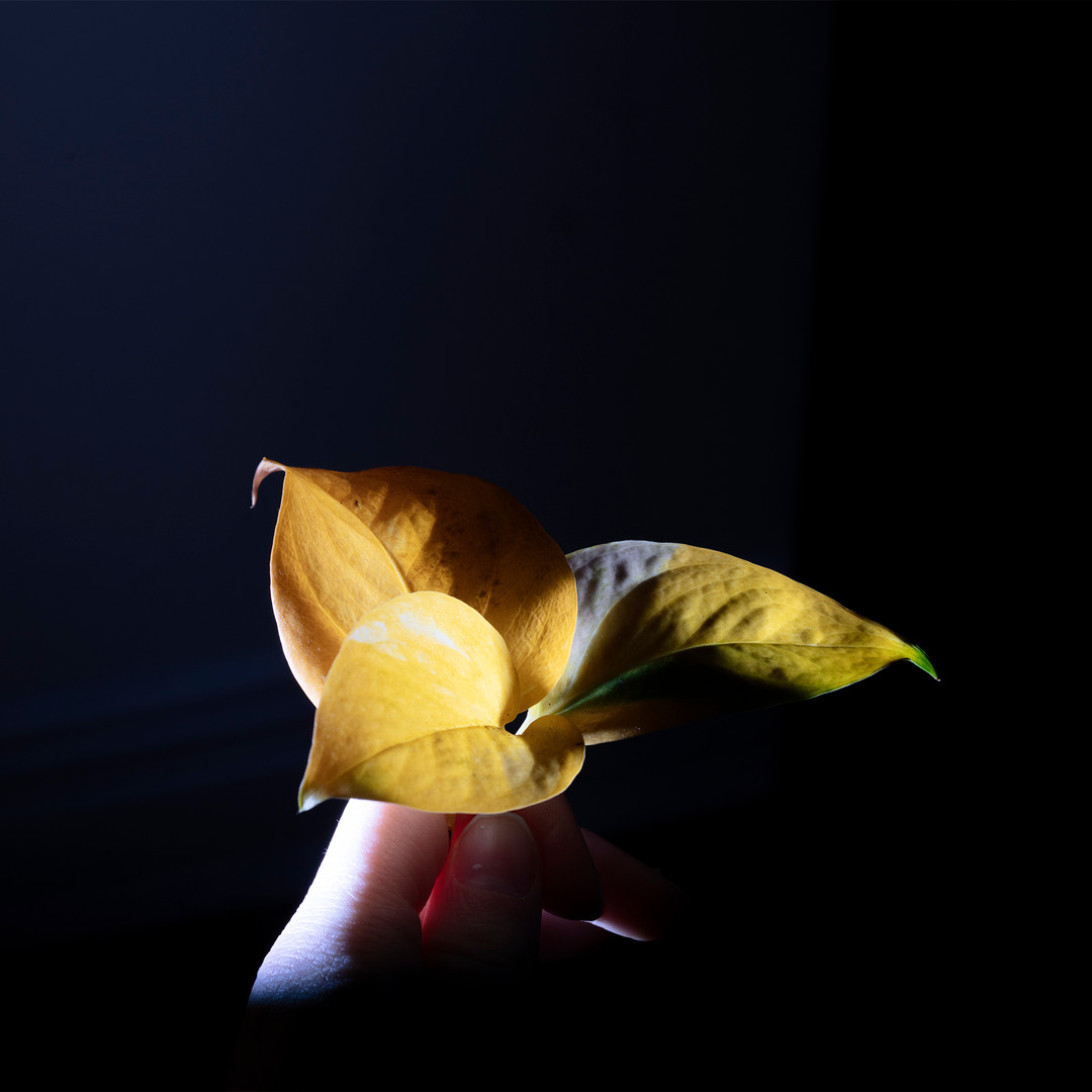 leafydead.jpg