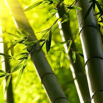 Essencia Bamboo.jpg