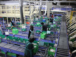 Tuyển nhân viên phân loại hàng hoá