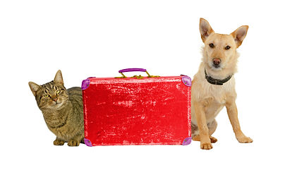 LetÃ_´s Travel! Dog and cat with a suit