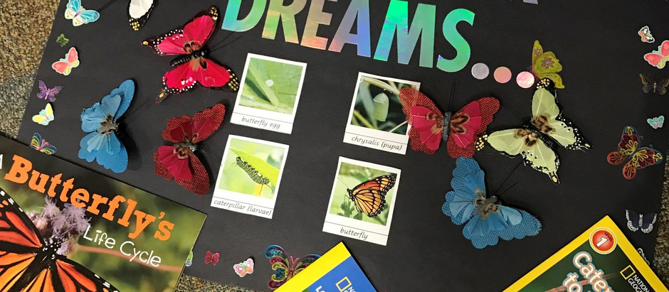 Caterpillar Dreams Pre-Kindergarten to 1st Grade - Going after your dreams!