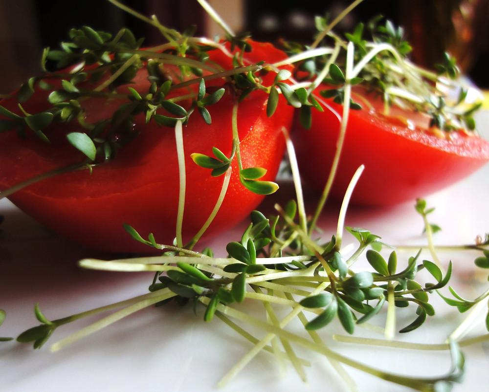 pomidory z kiełkami