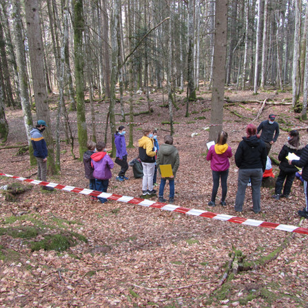Ecole en forêt