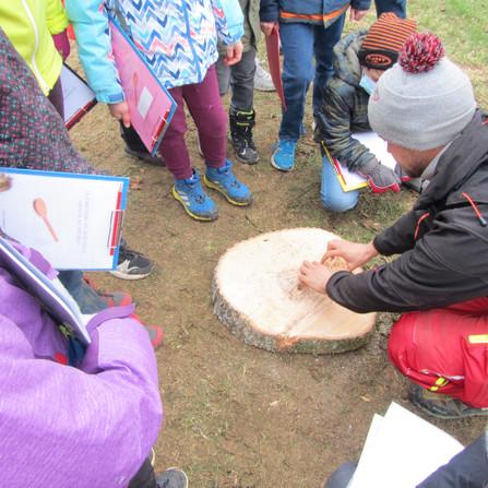 découvrir l'histoire d'un arbre