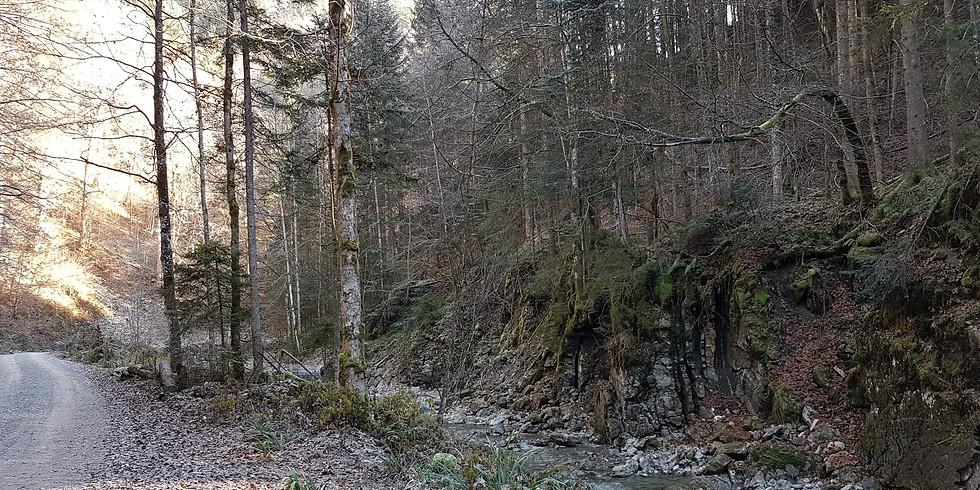 Fastenwandern nach Buchinger in Oberbayern (Alpenvorland)