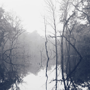 Eerie silence in Chitawan National Park