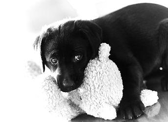 Bonnie Black & White.jpg