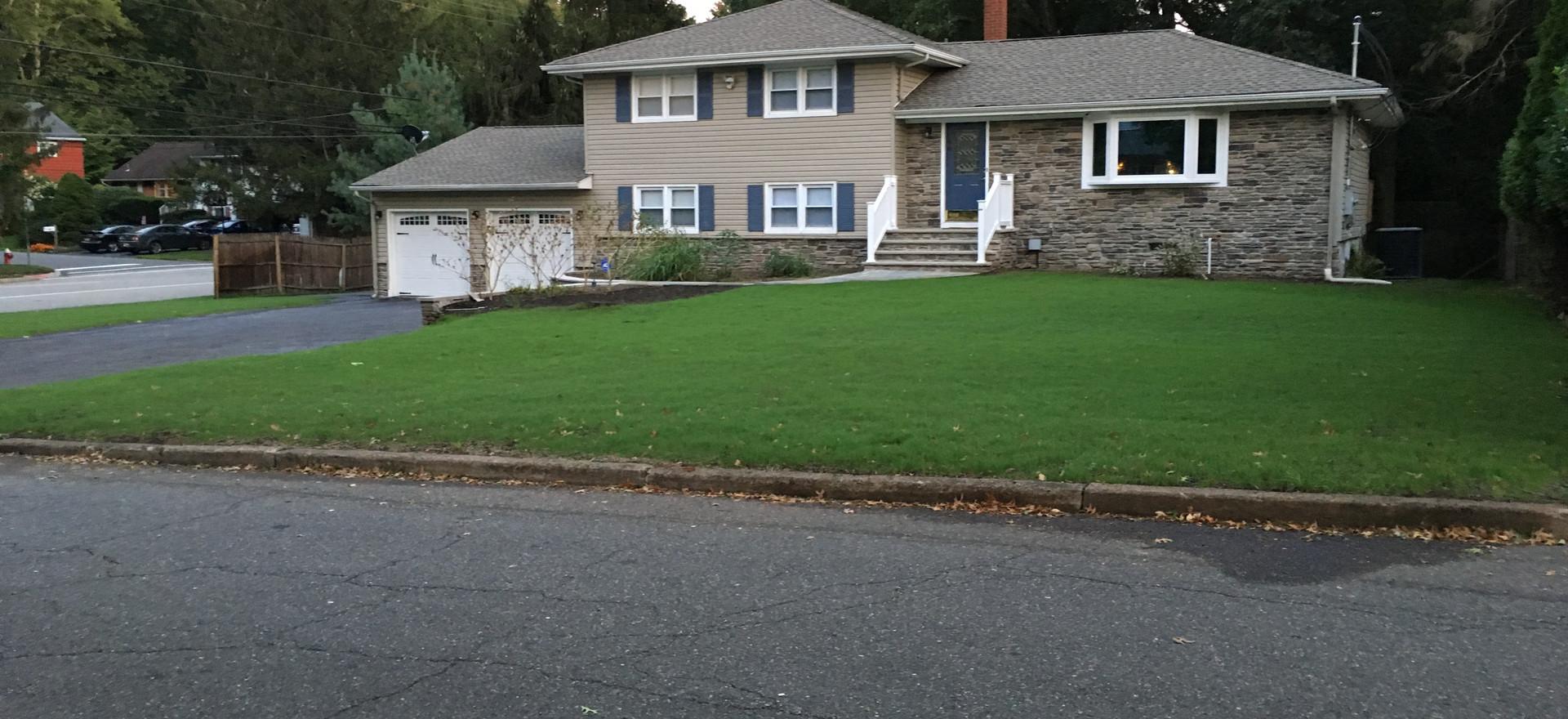 Grass 9 days after planting