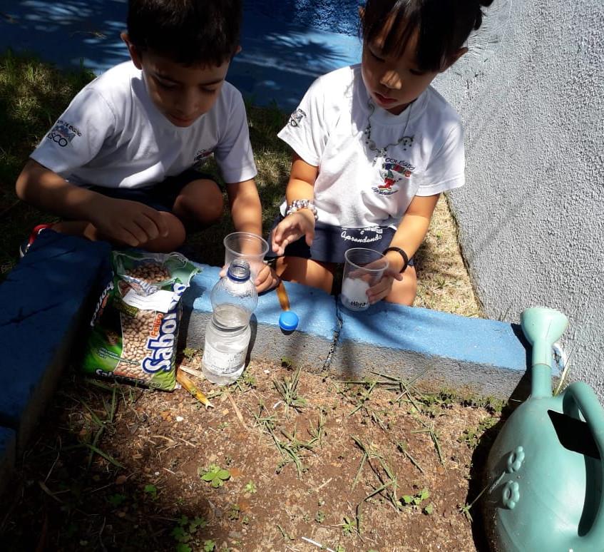 experiência prática com feijão (4)