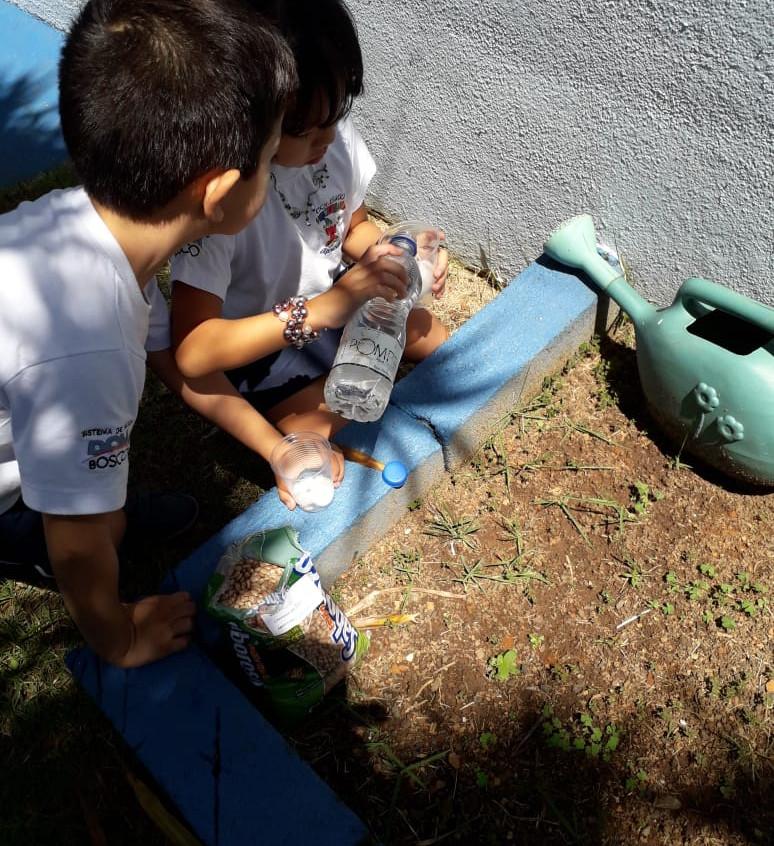experiência prática com feijão (6)