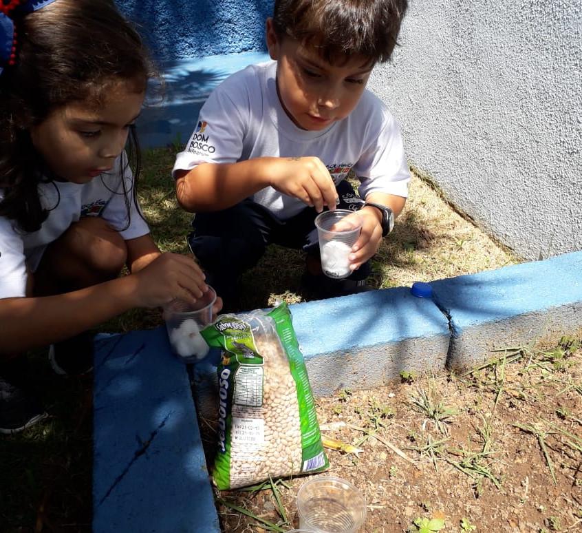 experiência prática com feijão (8)