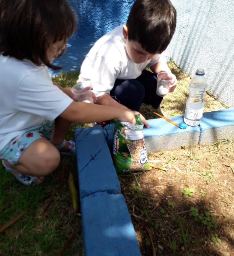 experiência prática com feijão (7)