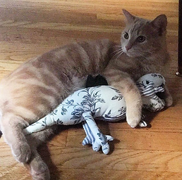 cat and stuffed dinosaur