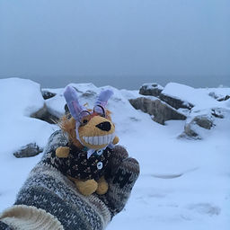bunny lion snow