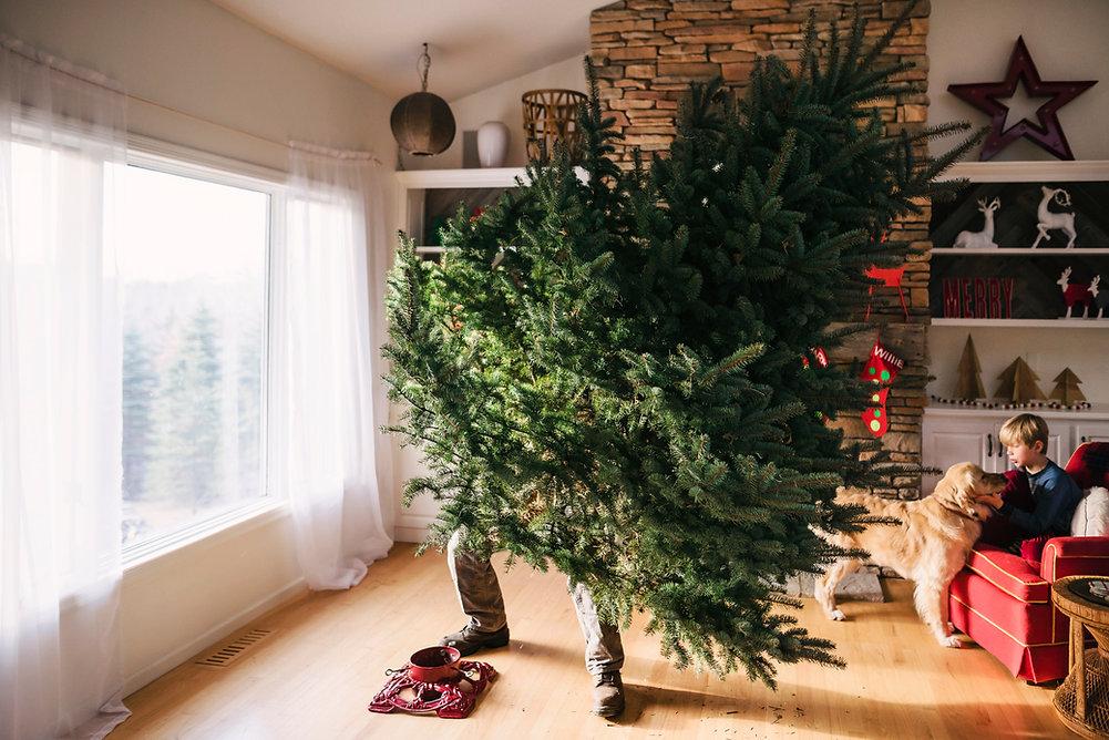 Configuración de un árbol de Navidad