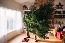 Een kerstboom opzetten