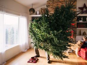 Livraison de sapins de Noël à domicile le samedi 5 décembre