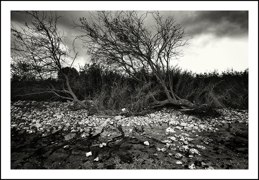 Intimate Landscape 1