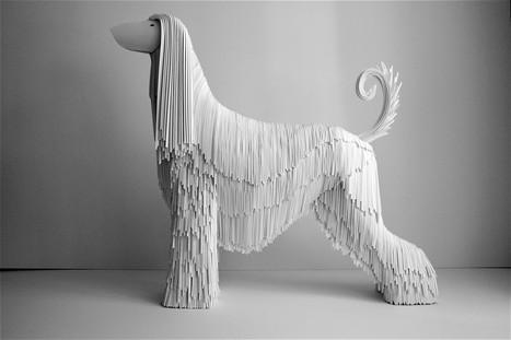 Afghan Hound, 2008