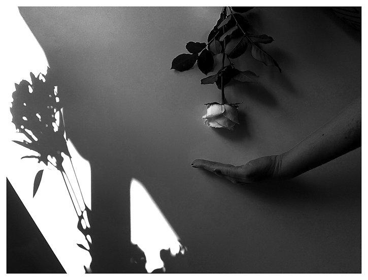 Rosa Branca 15x20