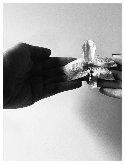 Orquídea 15X20