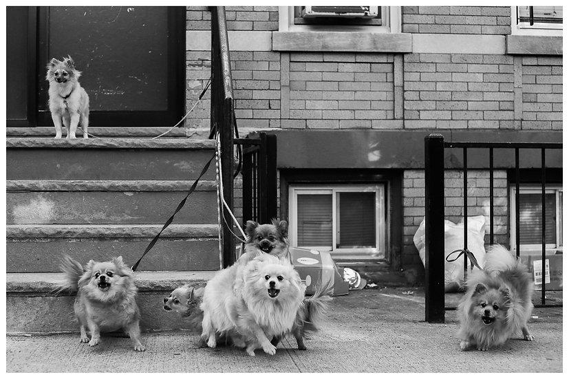 Cachorrada N.Y.C. 20x30