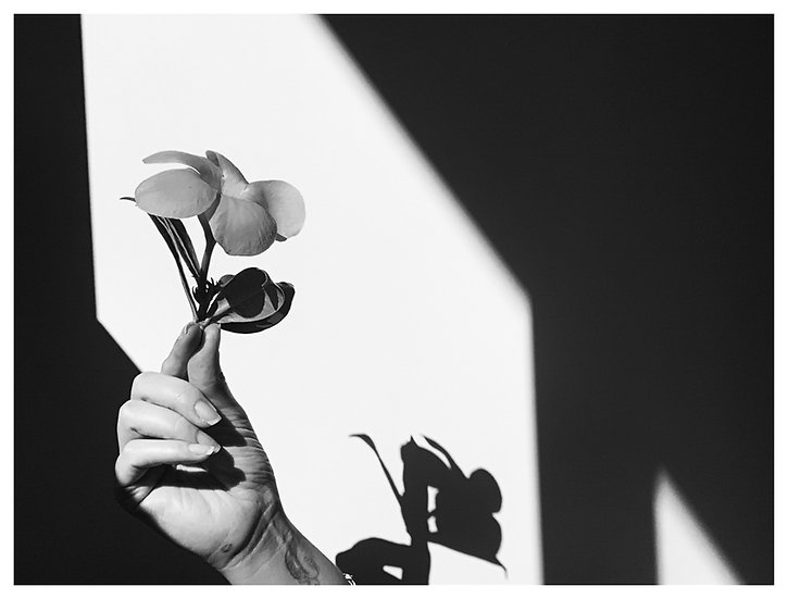 Flor e sombra 15x20