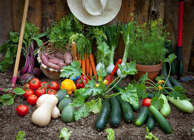 Vegetable-Growing.jpg