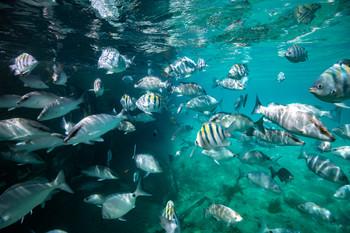 Brody_NonsuchIsland_MPA_Fish.jpg