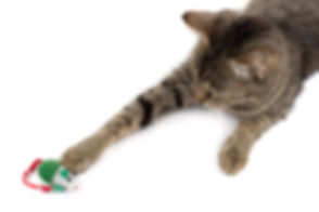 cat-playing-with-toy.jpg