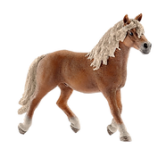 haflinger-stallion_2000x.png