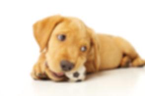 Dog_Chew.jpg