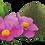 Thumbnail: Cistus - mod flåter og lopper - 120 tabletter