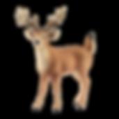 Schleich-dyr-hvidhalet-hjort.png