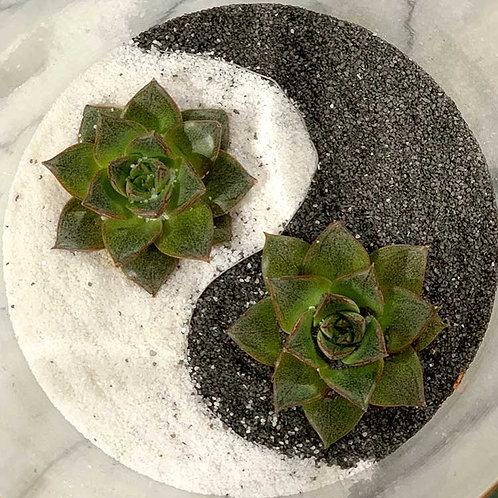 Yin & Yang Terrarium