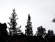 trees_GJxQ3wdd_M.jpg