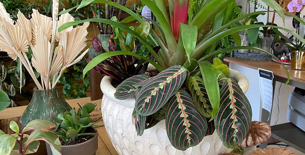 Gorgeous Bromeliad