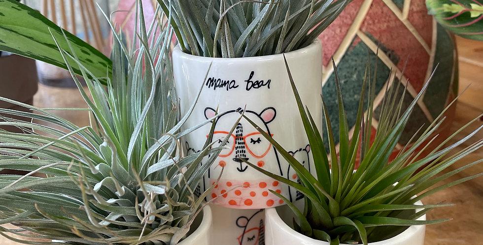 Adorable Air Plants