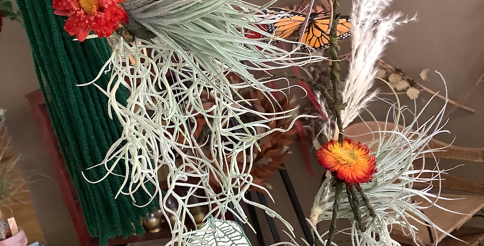 Hanging Air Plants for Spring